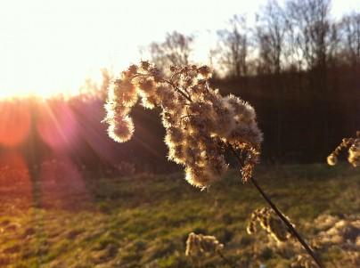 Foto-Frühling - iPhone-Aufnahme