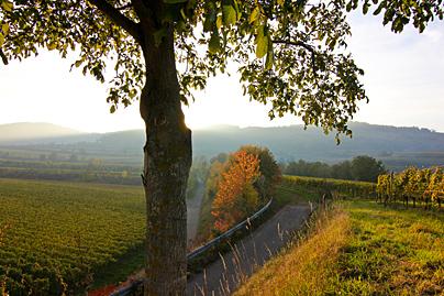 Herbstimpressionen vom Kaiserstuhl