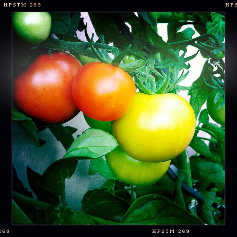 herbst tomaten joachimott journal. Black Bedroom Furniture Sets. Home Design Ideas