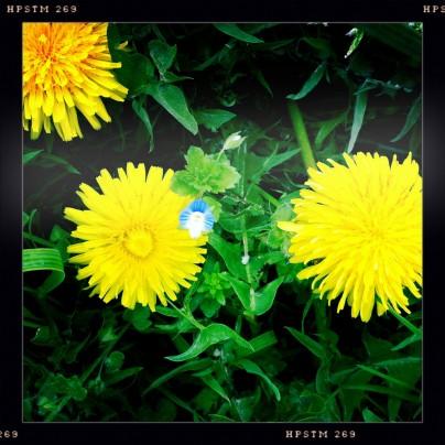 Frühling an Nimberg