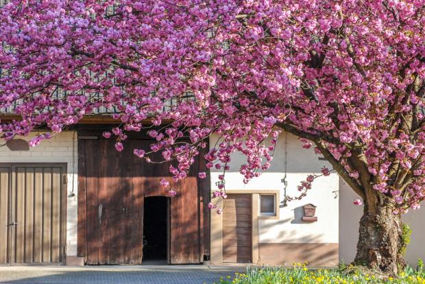 Frühlings-Blütenpracht