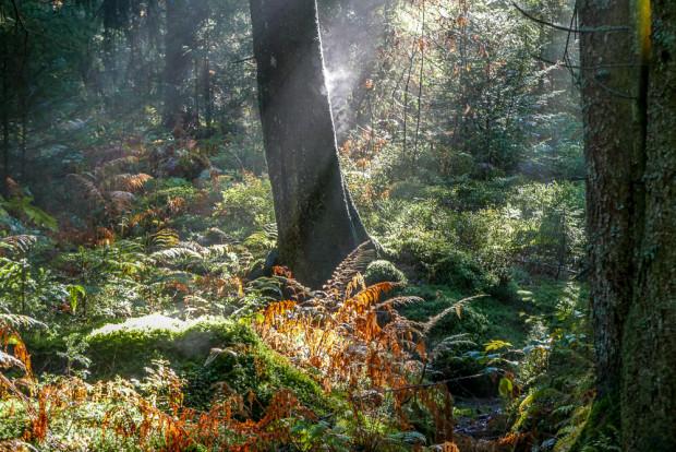 Herbstfotos leben von dem magischen Licht und leuchtenden Farben.