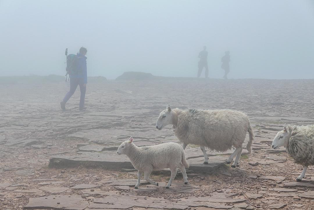 Dunst und Regen fallen eigentlich für Fotografen nicht wirklich unter schlechtes Wetter, denn sie bringen oft reizvolle Ausblicke.