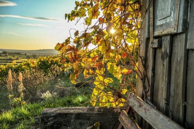 Auch Landschaftsfotos lassen sich gut mit dem Bokeh kombinieren.