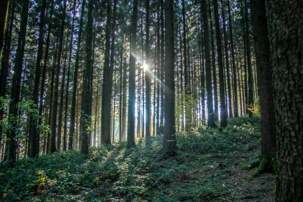Stimmungsvoller Schwarzwald